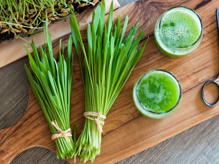 Young Green Barley Can Keep Colon Cancer At Bay Your News