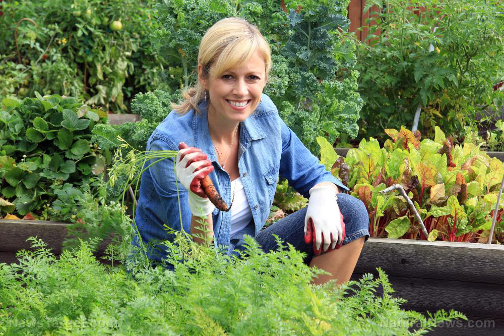 Now's the time to start a home garden