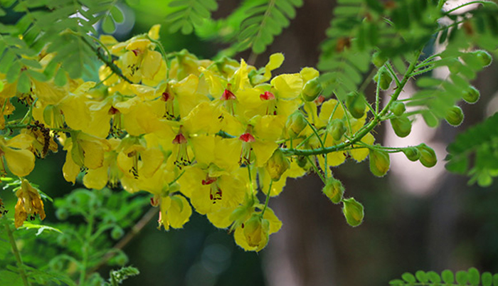 Study finds that mimosa thorn exhibits antioxidant properties