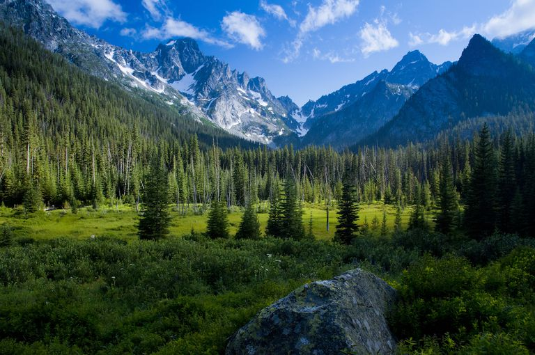 U.S. unveils vision for more development in national forests