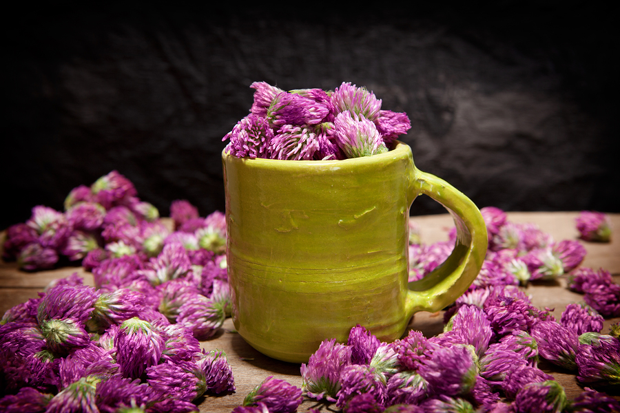 Relieve dry skin with this red clover salve
