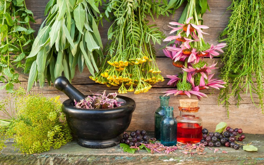 Medicinal herbs for the treatment of kidney diseases