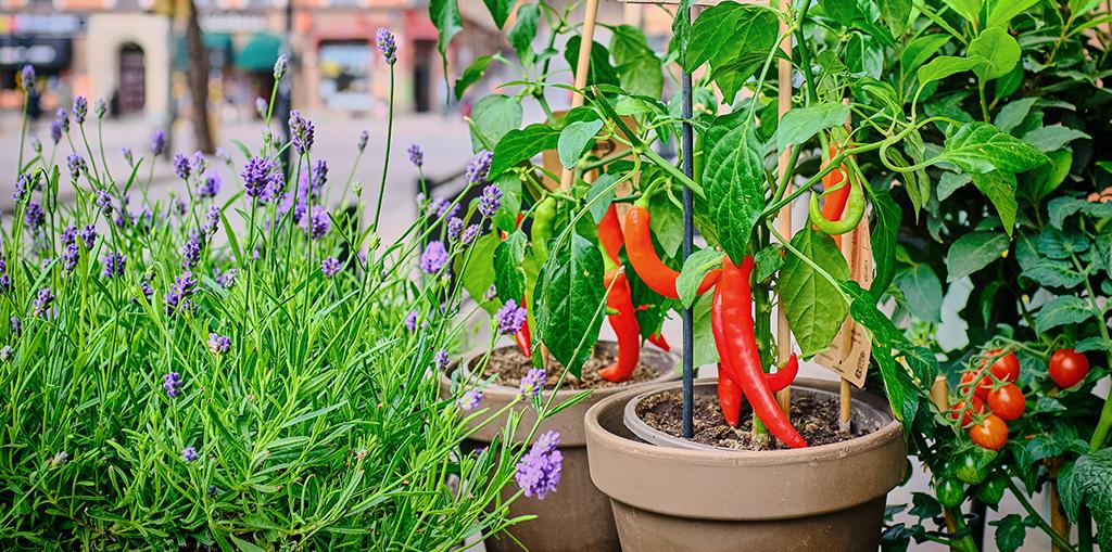 Home gardening basics: 24 Plants to grow in a bucket garden