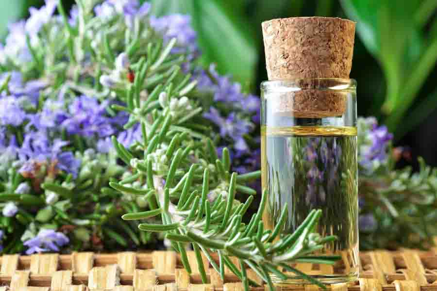 Rosemary essential oil can enhance working memory in children