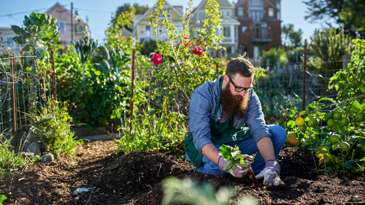 How safe are urban gardening crops?