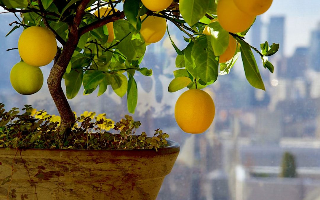Shake up your indoor gardening by planting these 8 fruits in buckets