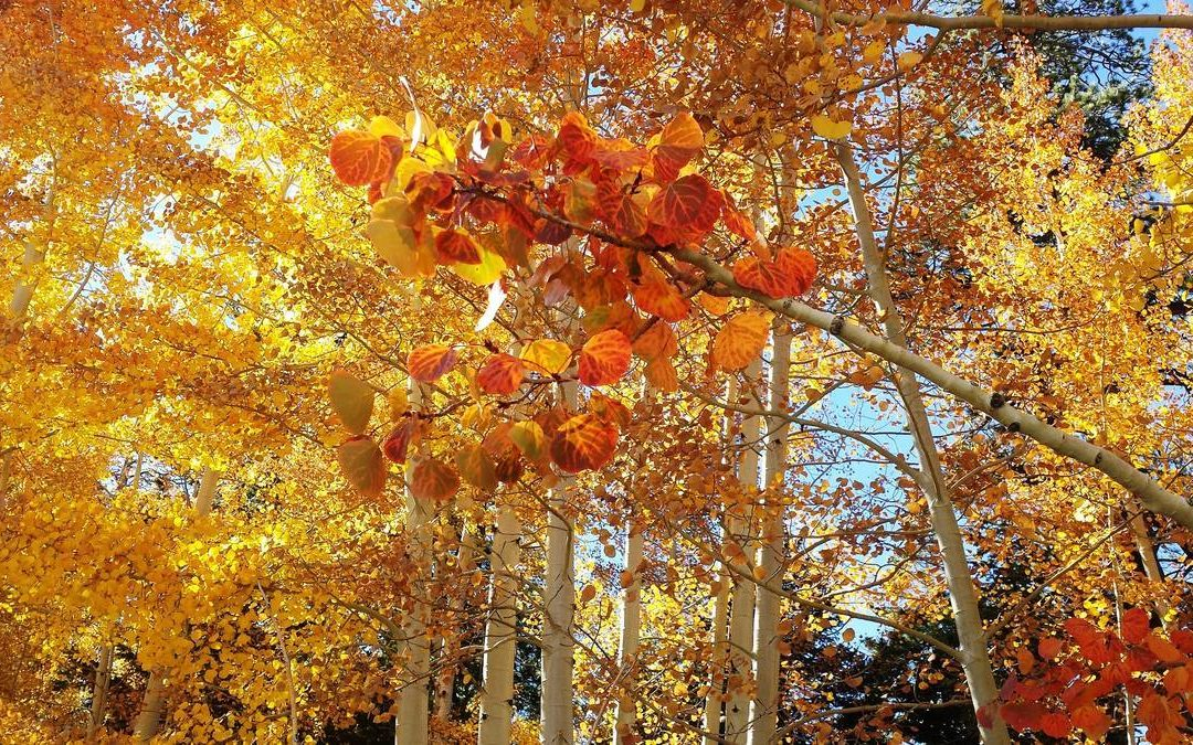 Foliage season dawning at Mount Charleston