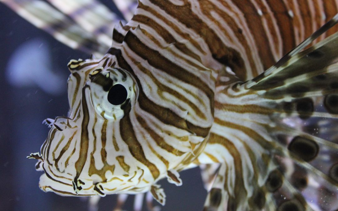 St. Lucie County Aquarium Receives Travelers' Choice Award from TripAdvisor