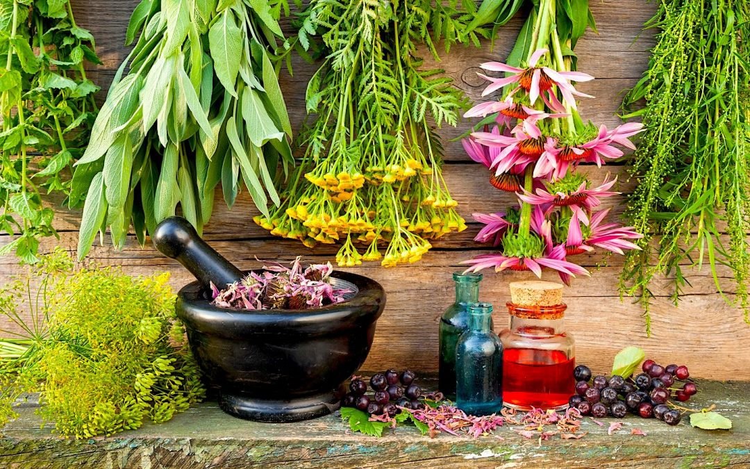 Medicinal plants: 15 Must-have herbs in your garden