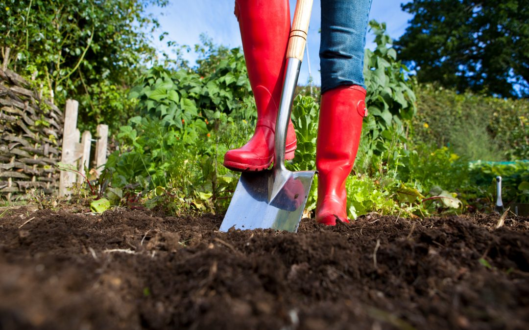 Home gardening tips: Boost garden yields with double digging