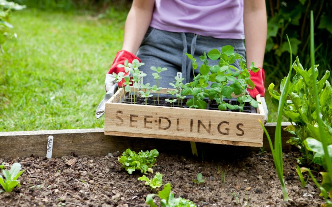 High-calorie vegetables to plant in your home garden