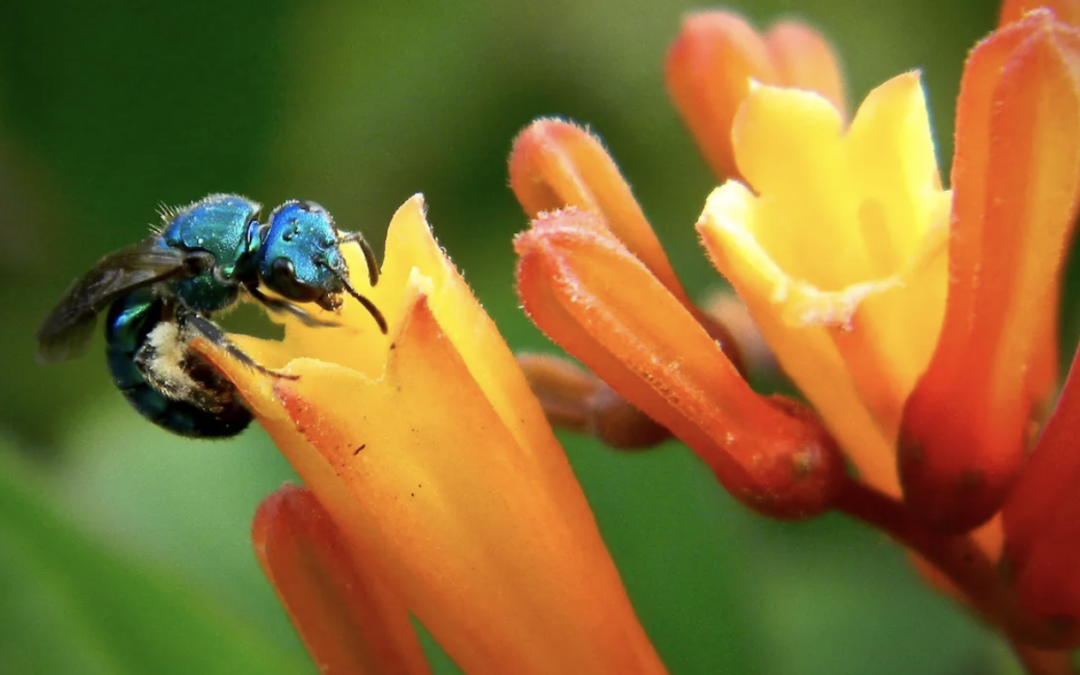 Report: Two-fifths of all plant species face extinction