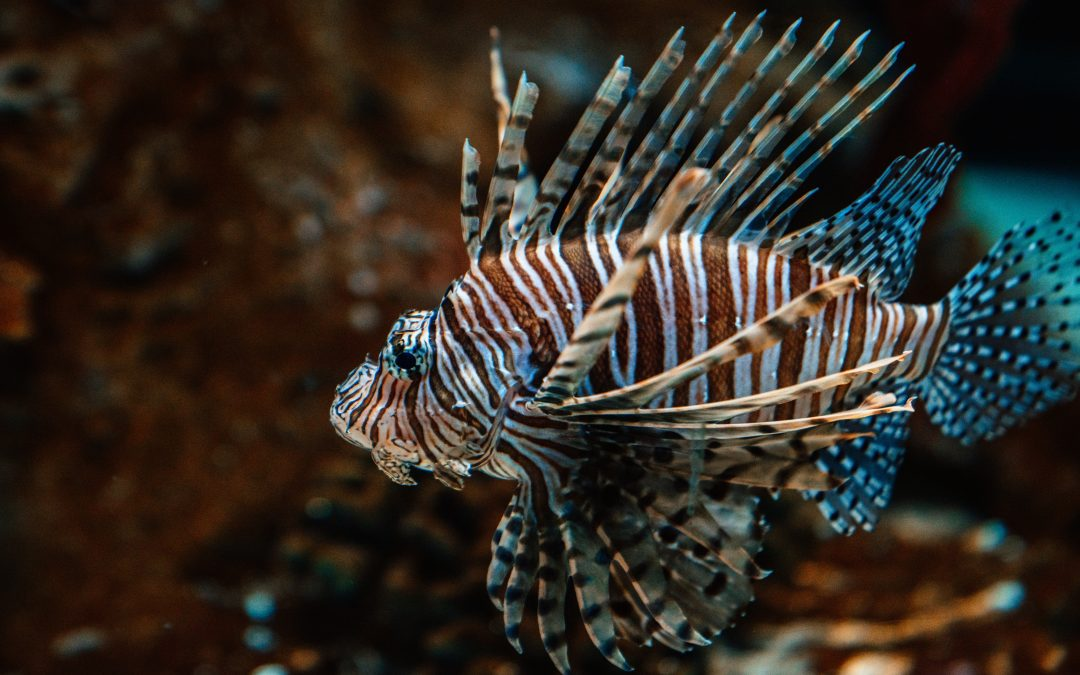 Mark your calendars: 2021 Lionfish Festival May 15-16 in Destin; vendors and divers wanted