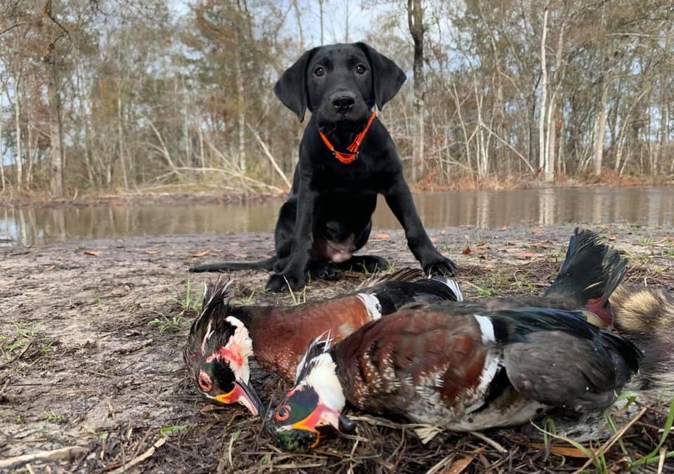 Patrick Cline fared well with water fowl