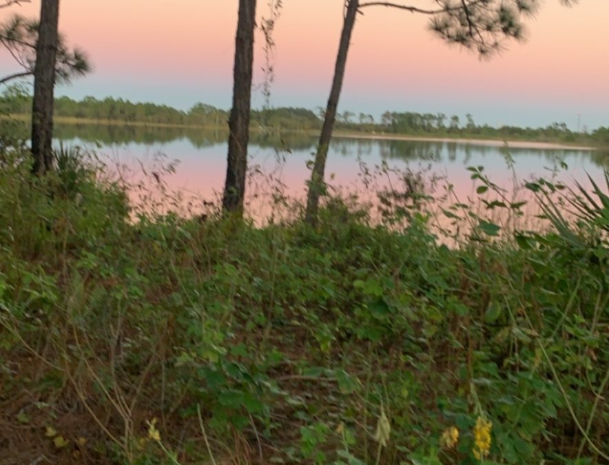 Fall in Love with Nature Thanks To St. Lucie County Guided Hikes