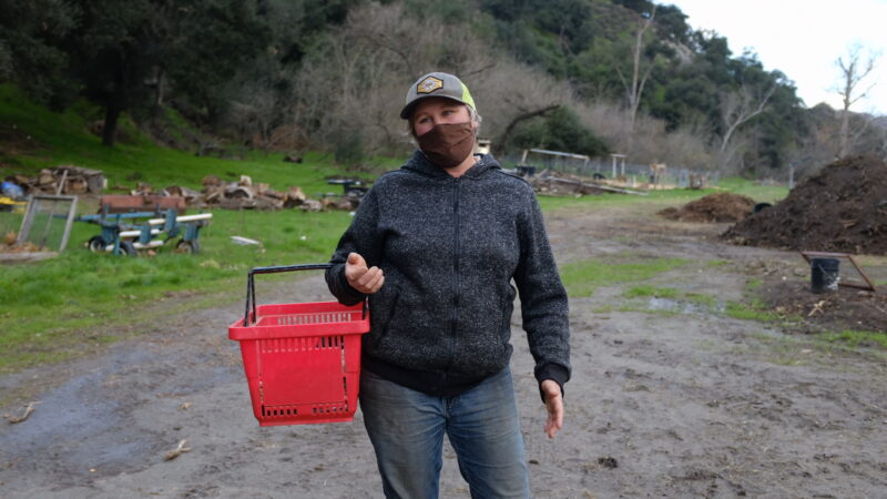 Environment Report: Local Farms Want Your Table Scraps