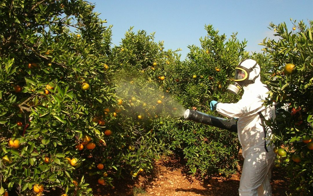 EPA approves use of toxic pesticide previously banned for use on citrus