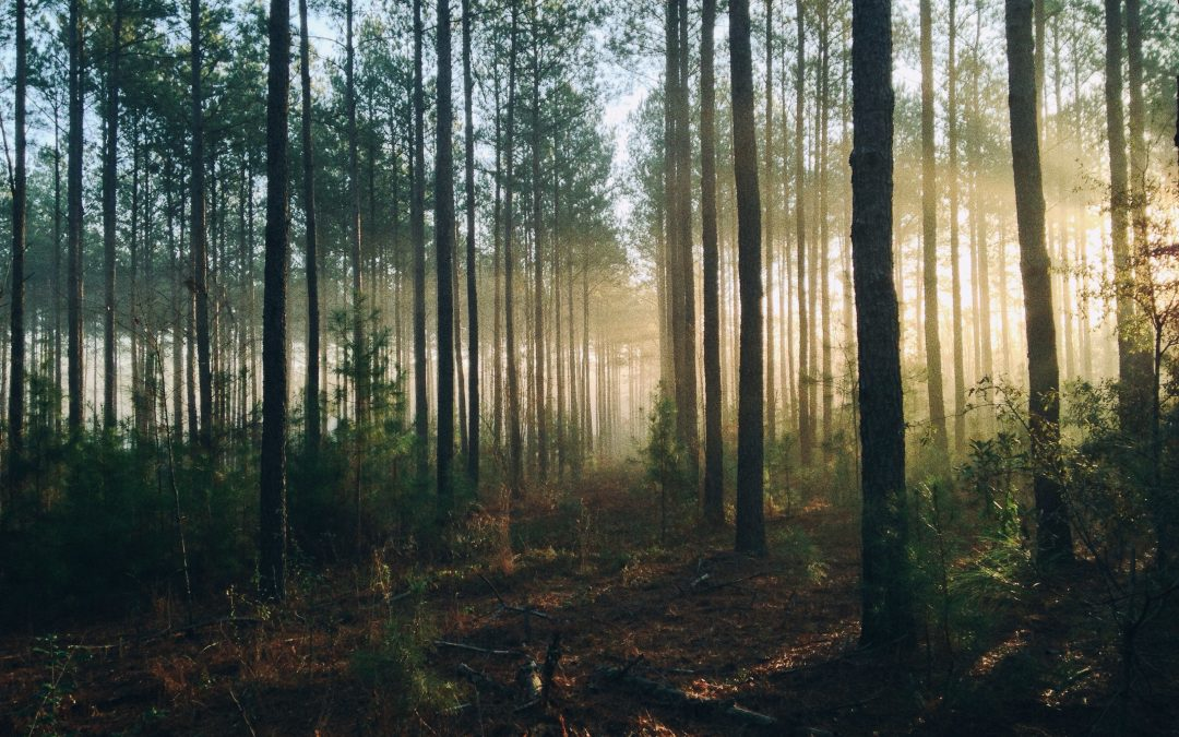 Florida Forest Closures and Advisories