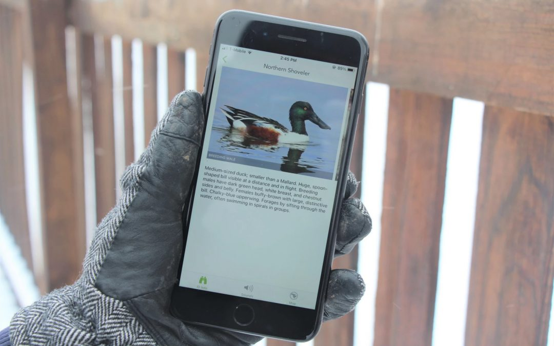 See A Bird In Kansas? Tell The World's Scientists With Your Phone
