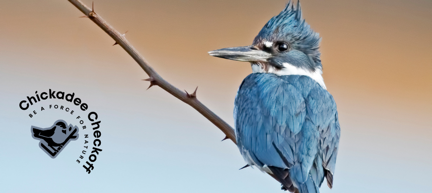 Donate A Portion Of Your Tax Return To Support Kansas Wildlife
