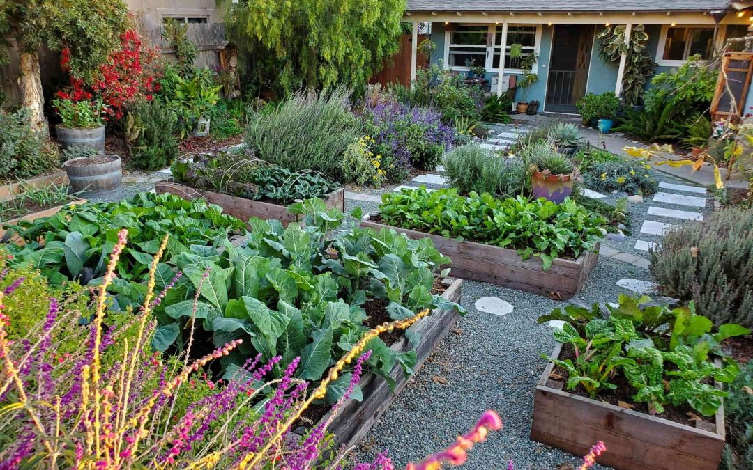 6 Things to expect when you start a small-scale homestead
