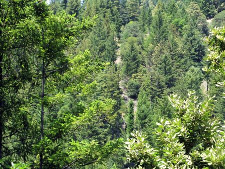 tagreuters.com2021binary_LYNXMPEH3T1BG-VIEWIMAGE California program overestimates climate benefits of forest offsets - study Environment Top Stories U.S. [your]NEWS