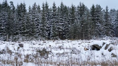 You think money grows on trees? Estonian firm seeks finance from forests