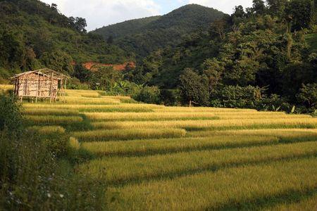 tagreuters.com2021binary_LYNXMPEH0N05S-VIEWIMAGE Bangladesh to buy Myanmar rice, putting aside Rohingya crisis World [your]NEWS