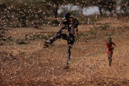 tagreuters.com2021binary_LYNXMPEH1L0EU-VIEWIMAGE Farmers fight back: Making animal feed from a locust plague World [your]NEWS